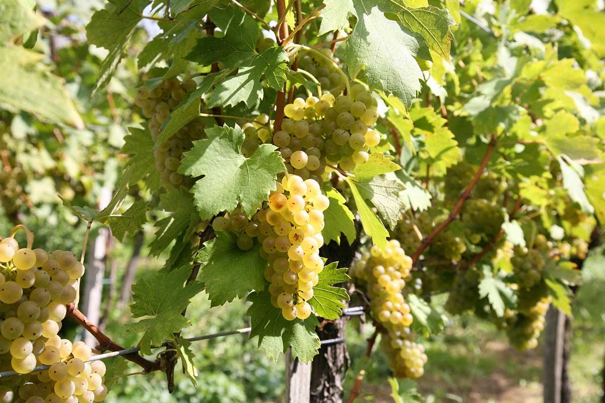 srneceva-domacija-galerija-grozdje